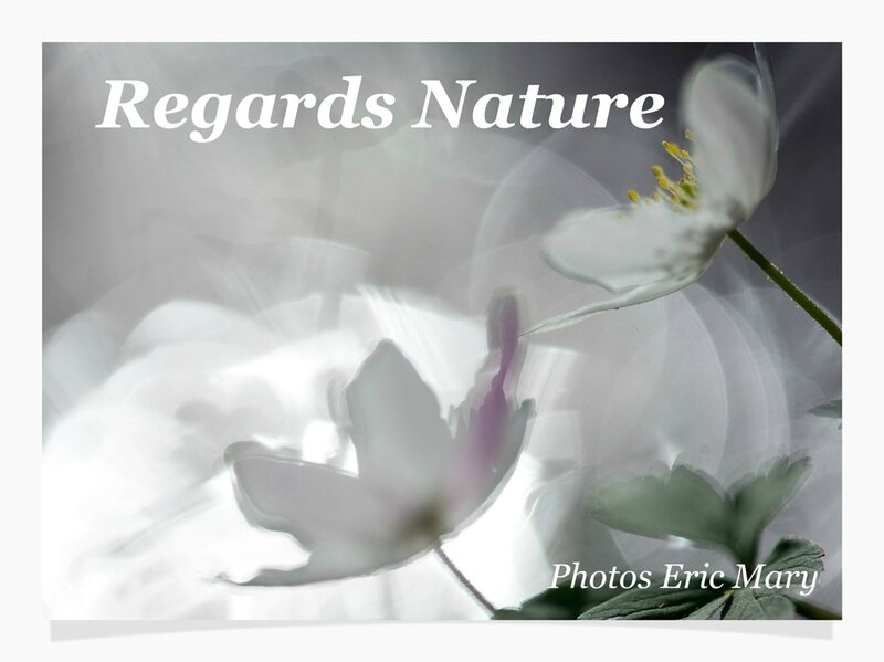 Livre Regards Nature