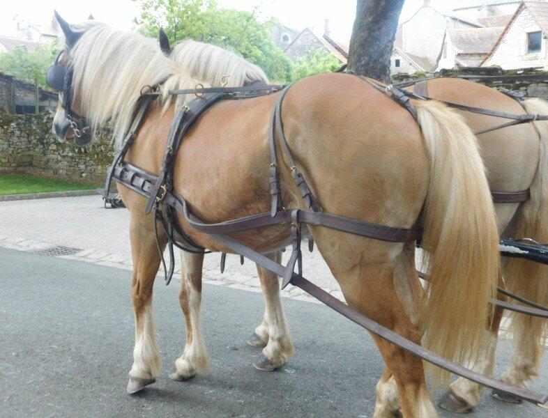 2 chevaux superbes [800x600]