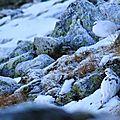 lagopéde alpin 27