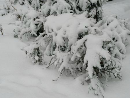 neige 12022013