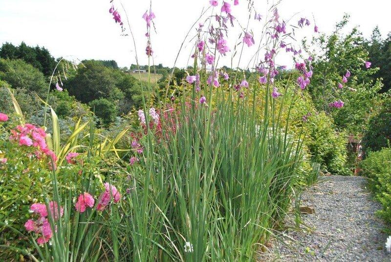 le jardin de la Fée Morgane (2)
