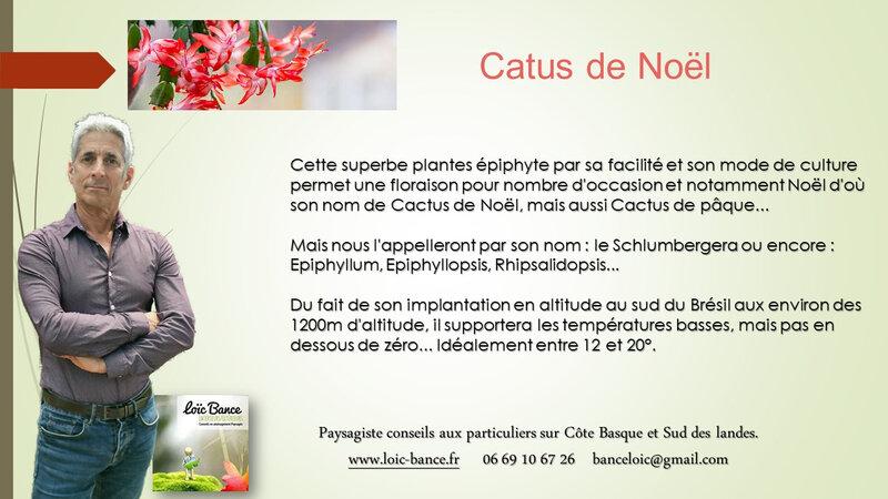 Paysagiste-Conseils-auprès-des-particuliers-Schlumbergera-Cactus-de-noel