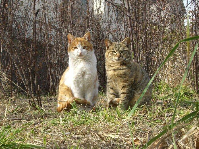 Edogawa Cats