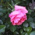 Mon jardin, ma passion
