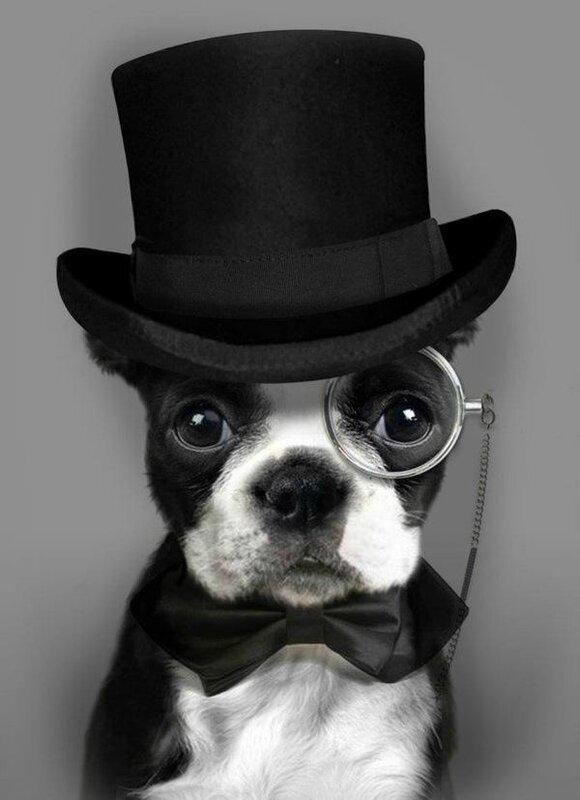 portrait beau chien