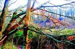 branches_horizontales