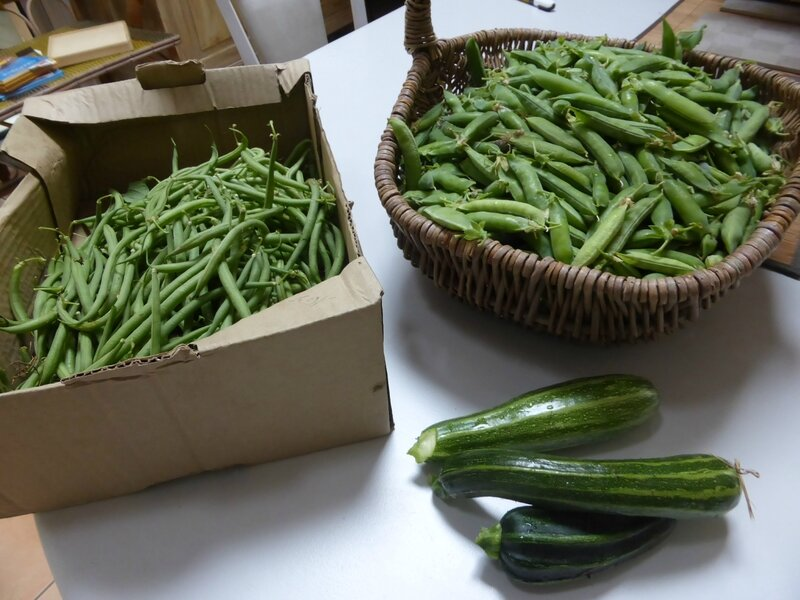 14-haricots-petits pois-courgettes