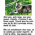 annonce chat