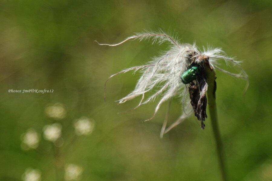 Photos JMP©Koufra 12 - Le Mas Fleurs - 09062018 - 100