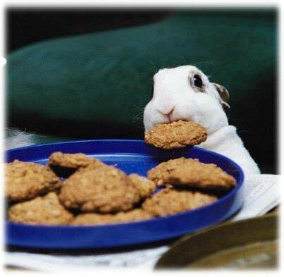 biscuitrongeur (7)