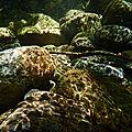 Pierres-tigres sous l'eau.