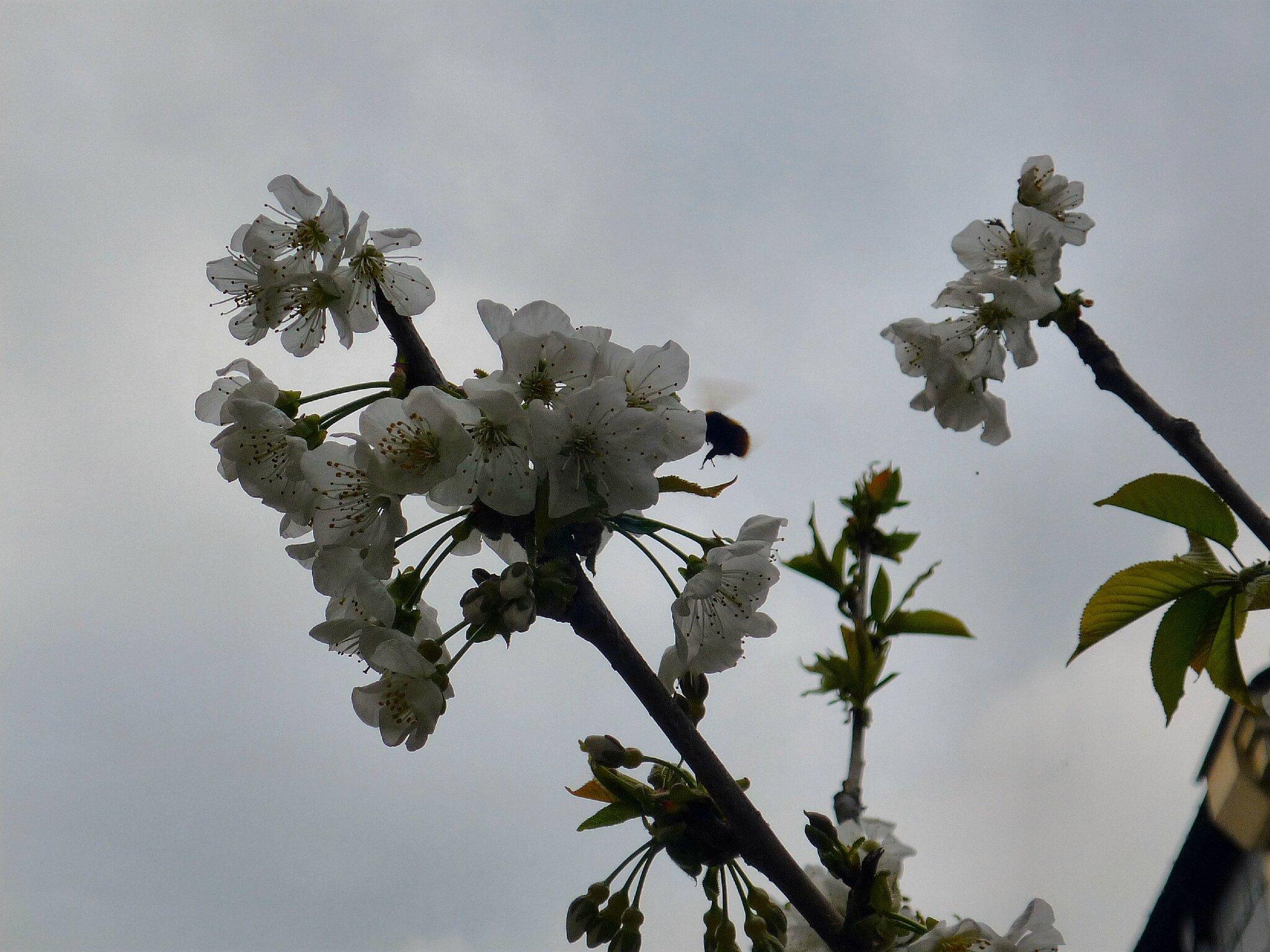 saumur avril 2014 003