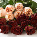 St valentin...dite le avec ou sans fleur !