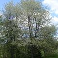 Entourée de cerisiers....