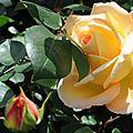 Marché aux fleurs de saint benoit