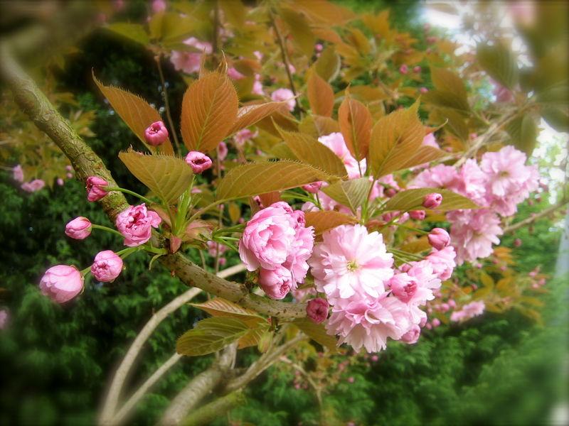 Qui Se Soucie De Regarder La Fleur De La Carotte Sauvage Au Temps