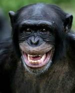 Chimpanzé Eh,Eh