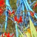 jardin arbre bleu