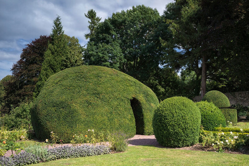 If-grotte • Taxus baccata