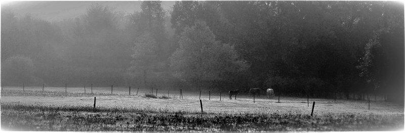 Chevaux_de_brouillardvista