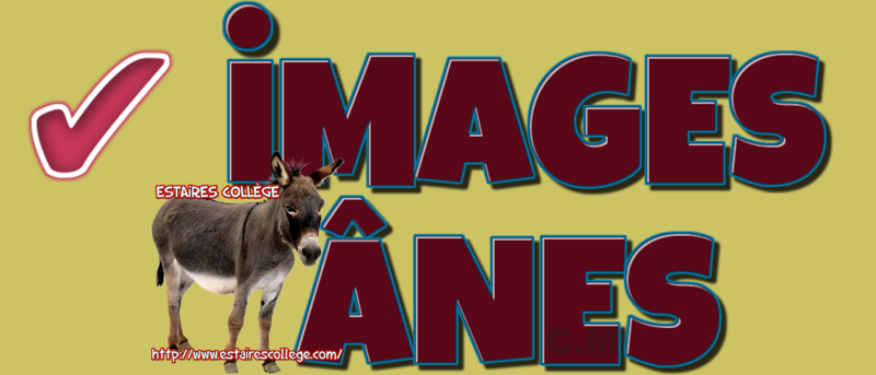 - iMAGES ANES