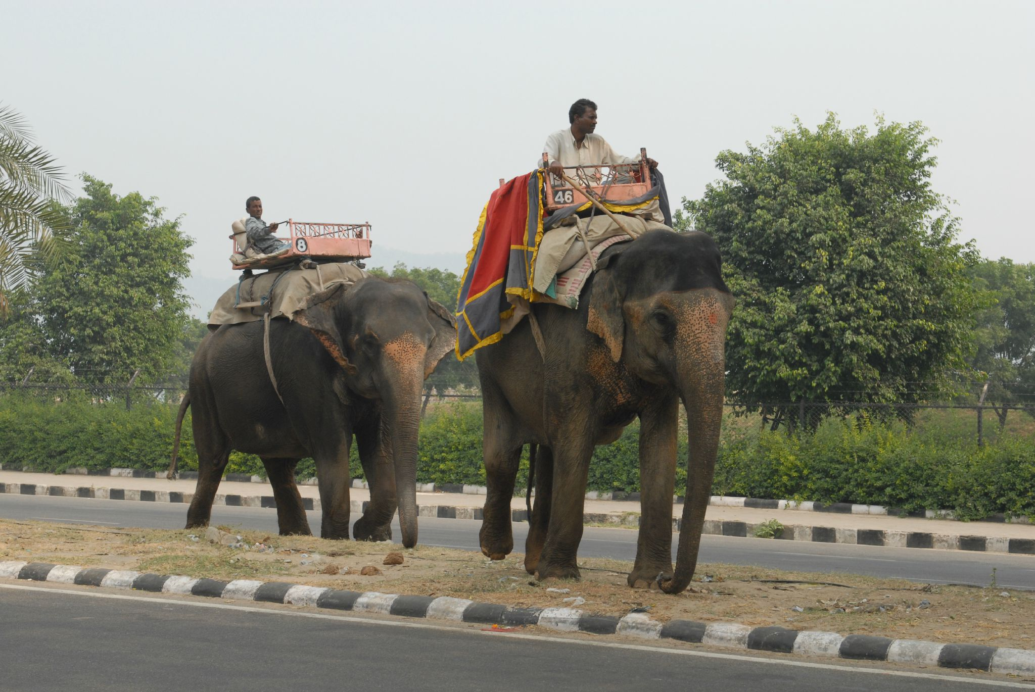 elephant, Jaipur