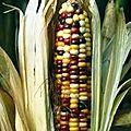 Farine et semoule de maïs de fréjus