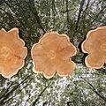 tables rondins forme fleurs