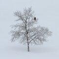 vautour solitaire