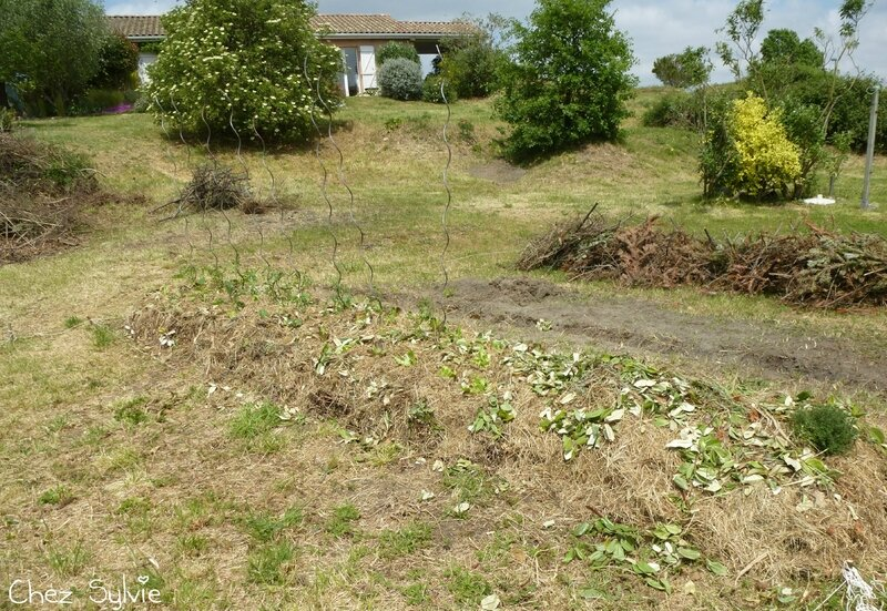 Potager permaculture plantations 02