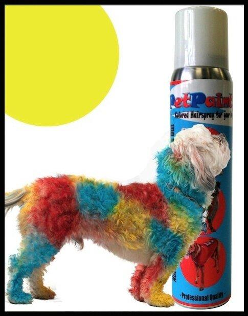 pet paint 4