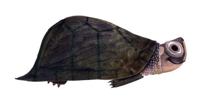 smiling_terrapin_675x351_custom