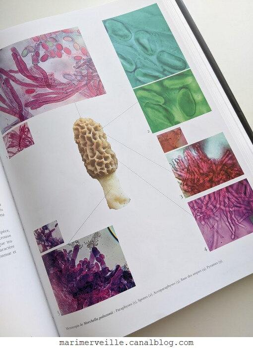 Livre Morilles de France et d'Europe - microscopie - blog marimerveille