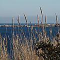 Epis, un songe d'Îles - Parc Marin -