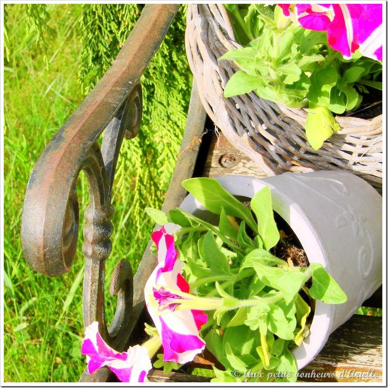 Plantation au jardin (19)