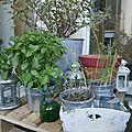 Plantes sur une palette