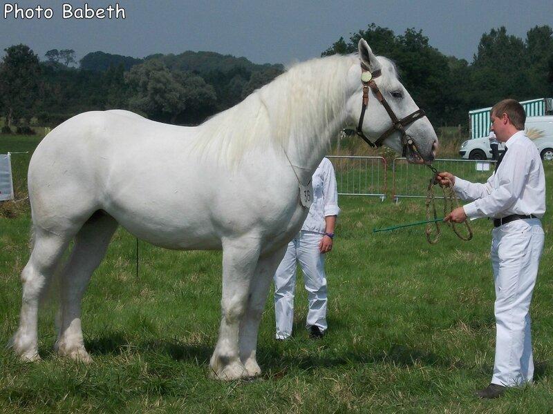 BRUME de Tachincourt - Concours National - Samer (62) - 26 juillet 2014 - 5e (3 ans grandes tailles)