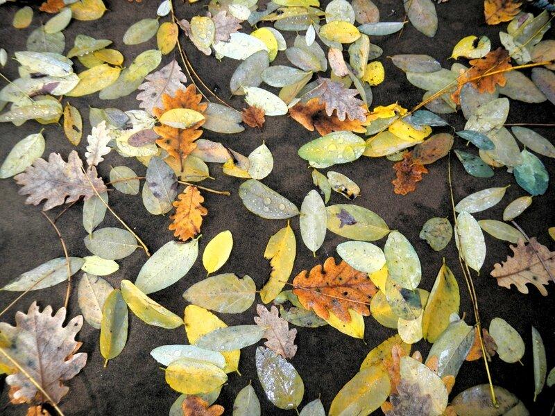 feuilles éparpillées yourtao
