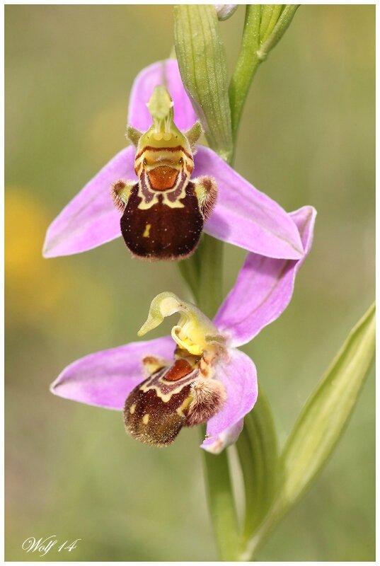 o-abeille14-03