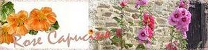170910_rose_capucine