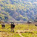 Trek - Hsipaw