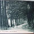 Montbard - Parc de Buffon - allée des platanes
