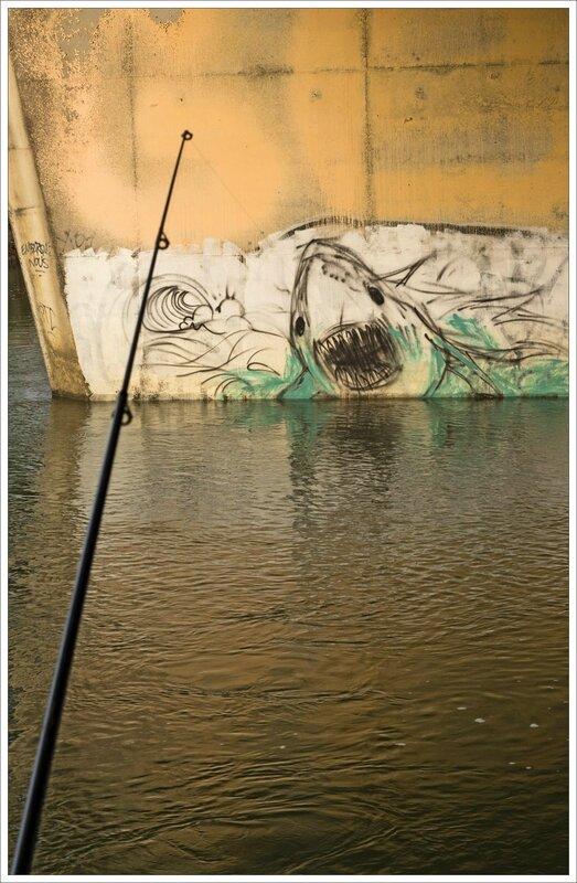 graff anim requin peche 280216