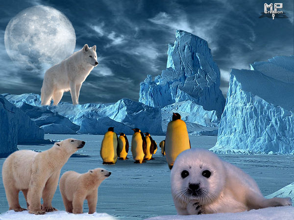 animaux des pays froid!