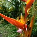 flowerland 055
