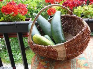 080612_courgettes