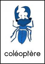 COLEOPTERE
