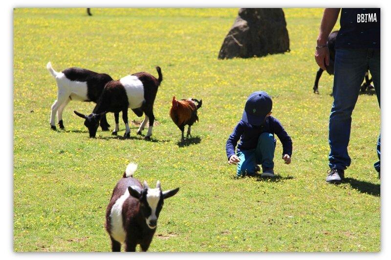 10-tropical-parc-sortie-famille-enfant-kids-bretagne-morbihan-saint-jacut-les-pins-faune-flore-tropicale-animalier-animaux-jardin-spectacle-cactus-bbtma-blog-parents-maman