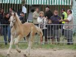 Inox, poulain de Brume de Tachincourt et Tecnoma - 29 Juillet 2018 - National Boulonnais - Samer (62)