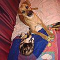 Liane et le chat
